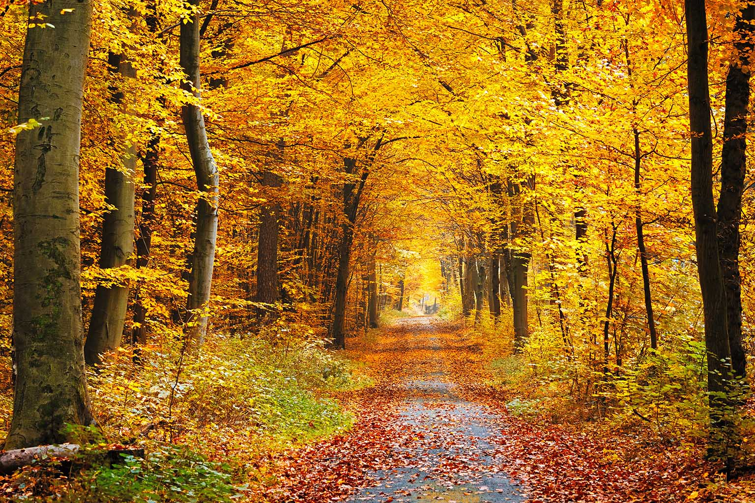 Canvas Prints - Autumn Forest
