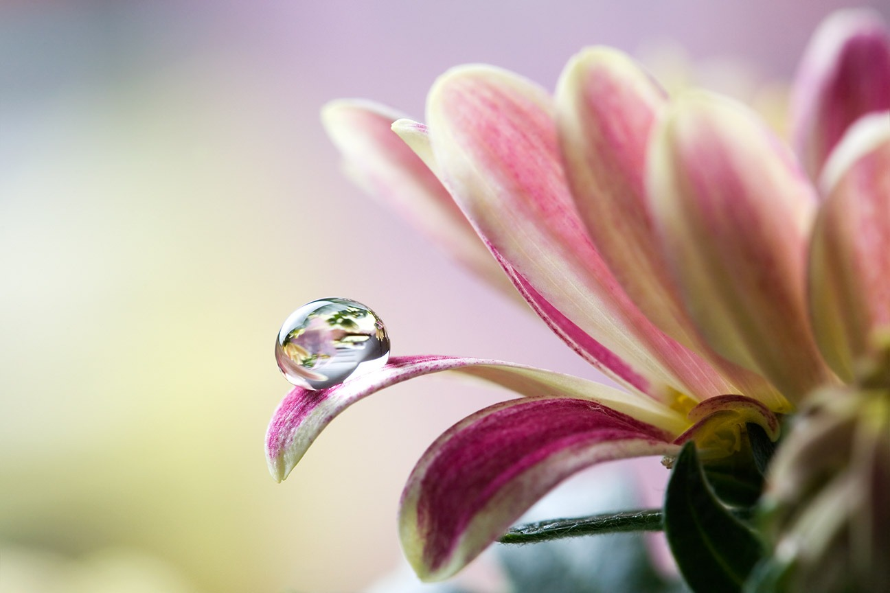 Canvas Print - Flower With Water Droplet
