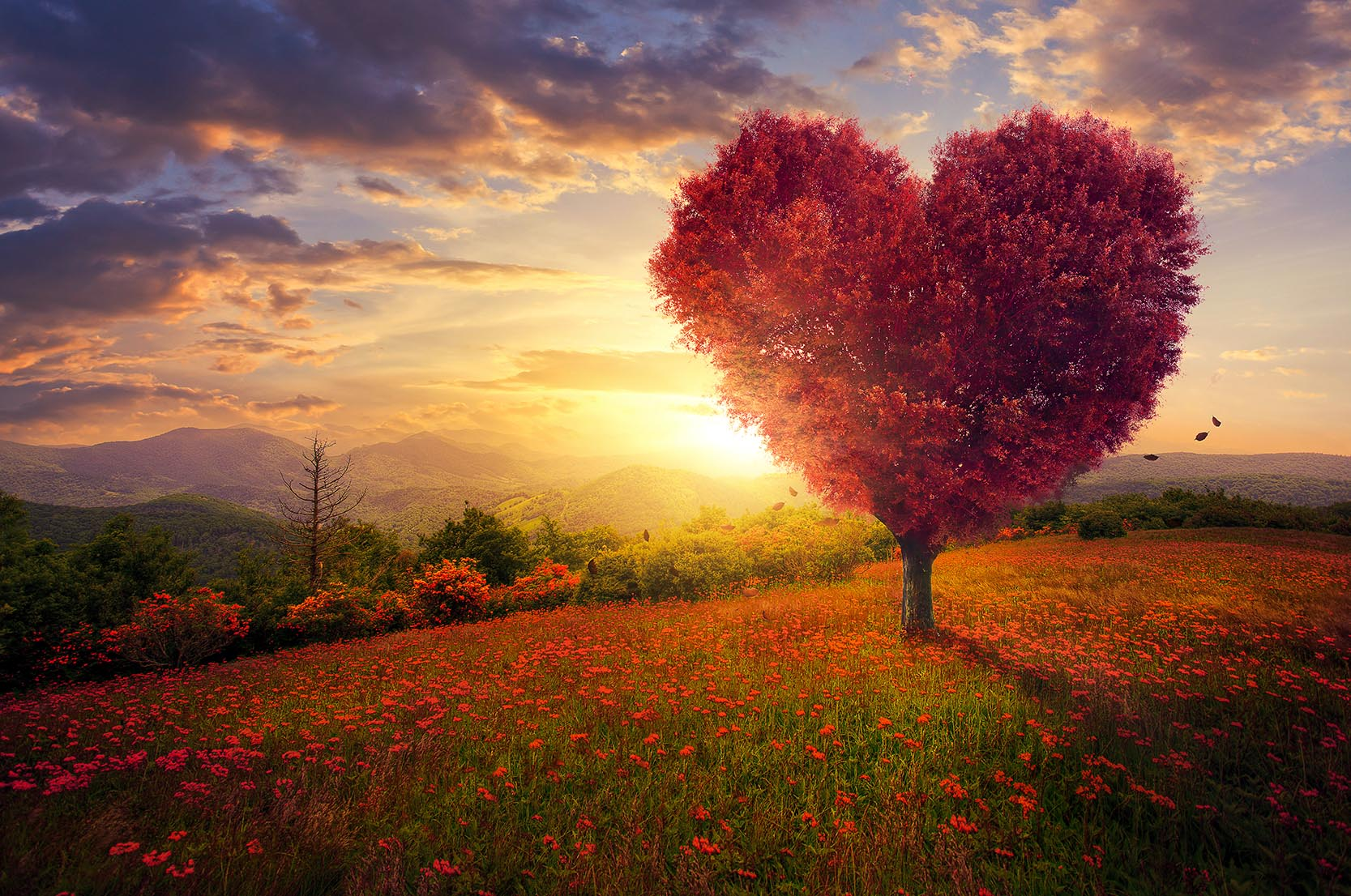 Canvas Print - Heart Shaped Tree