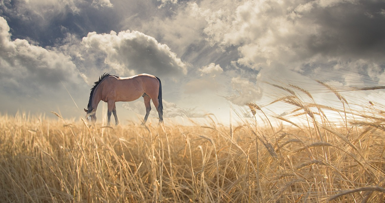 Canvas Print - Horse Grazing In Field