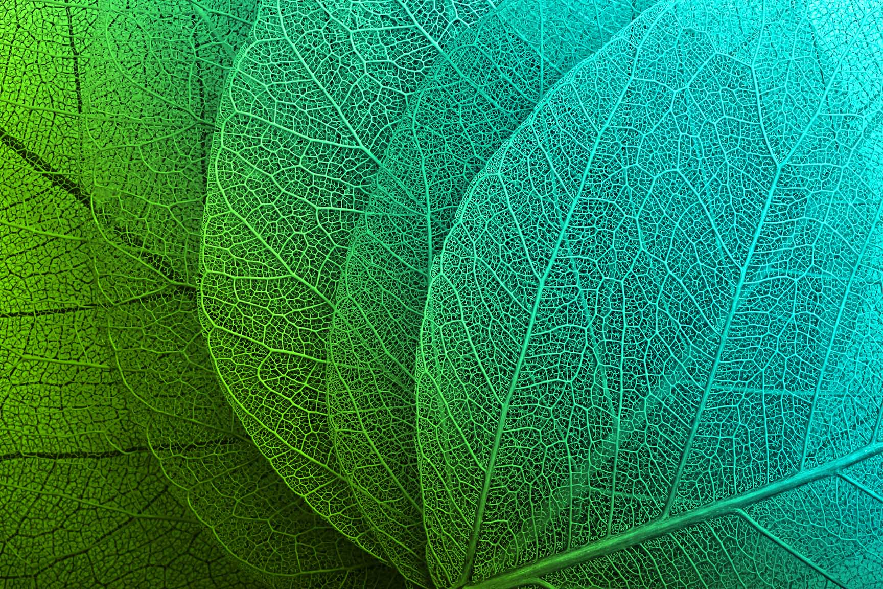 Canvas Print - Macro Leaves