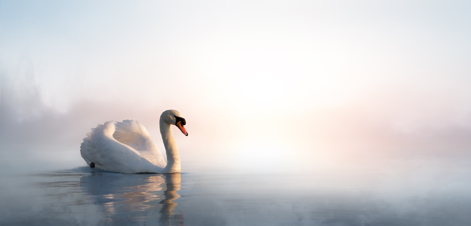 Canvas Print - Swan Floating On Lake