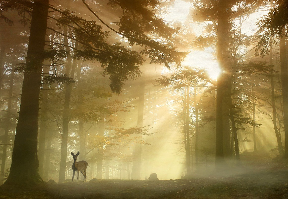 Canvas Print - Bambi