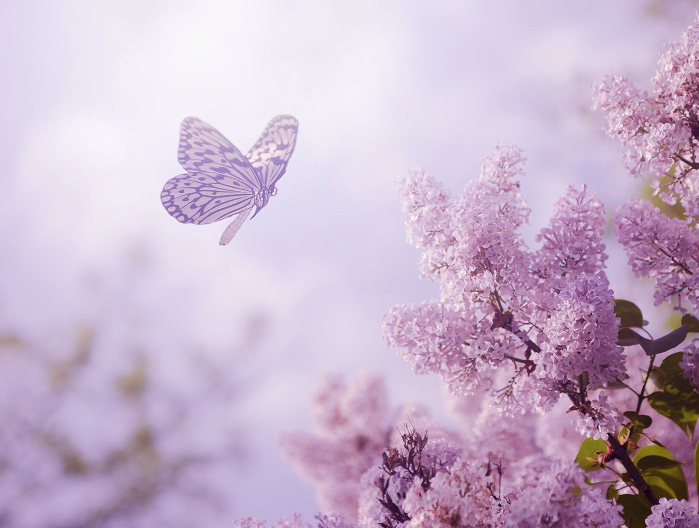 Canvas Print - Butterfly & Flower