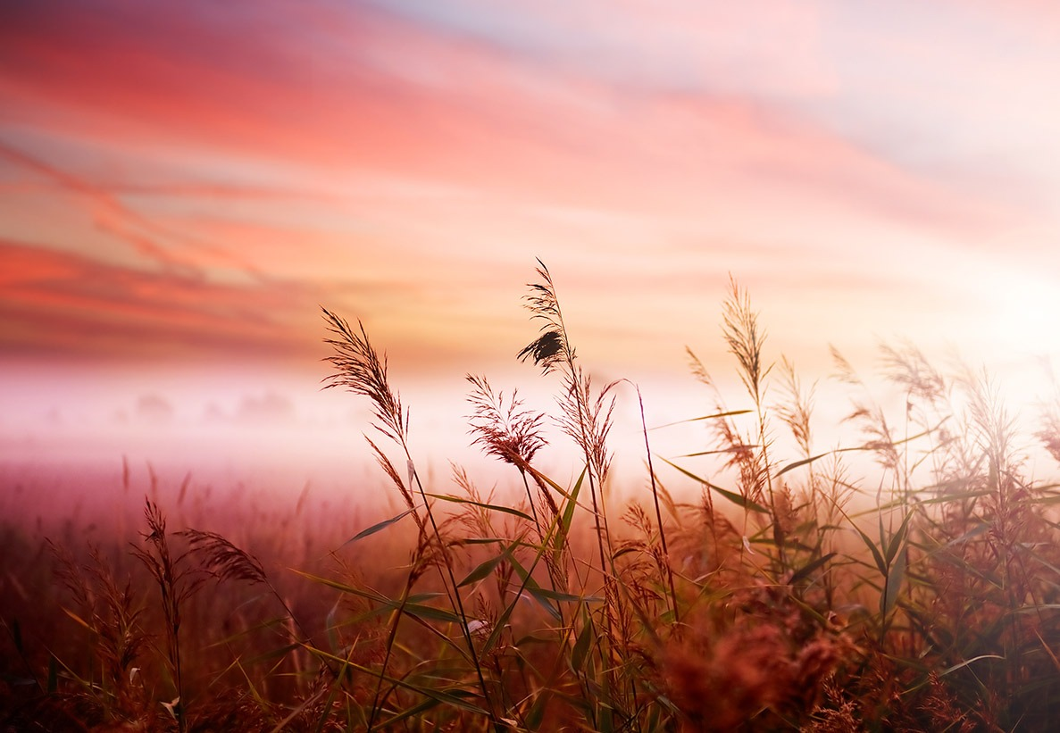 Canvas Print - Early Morning Mist