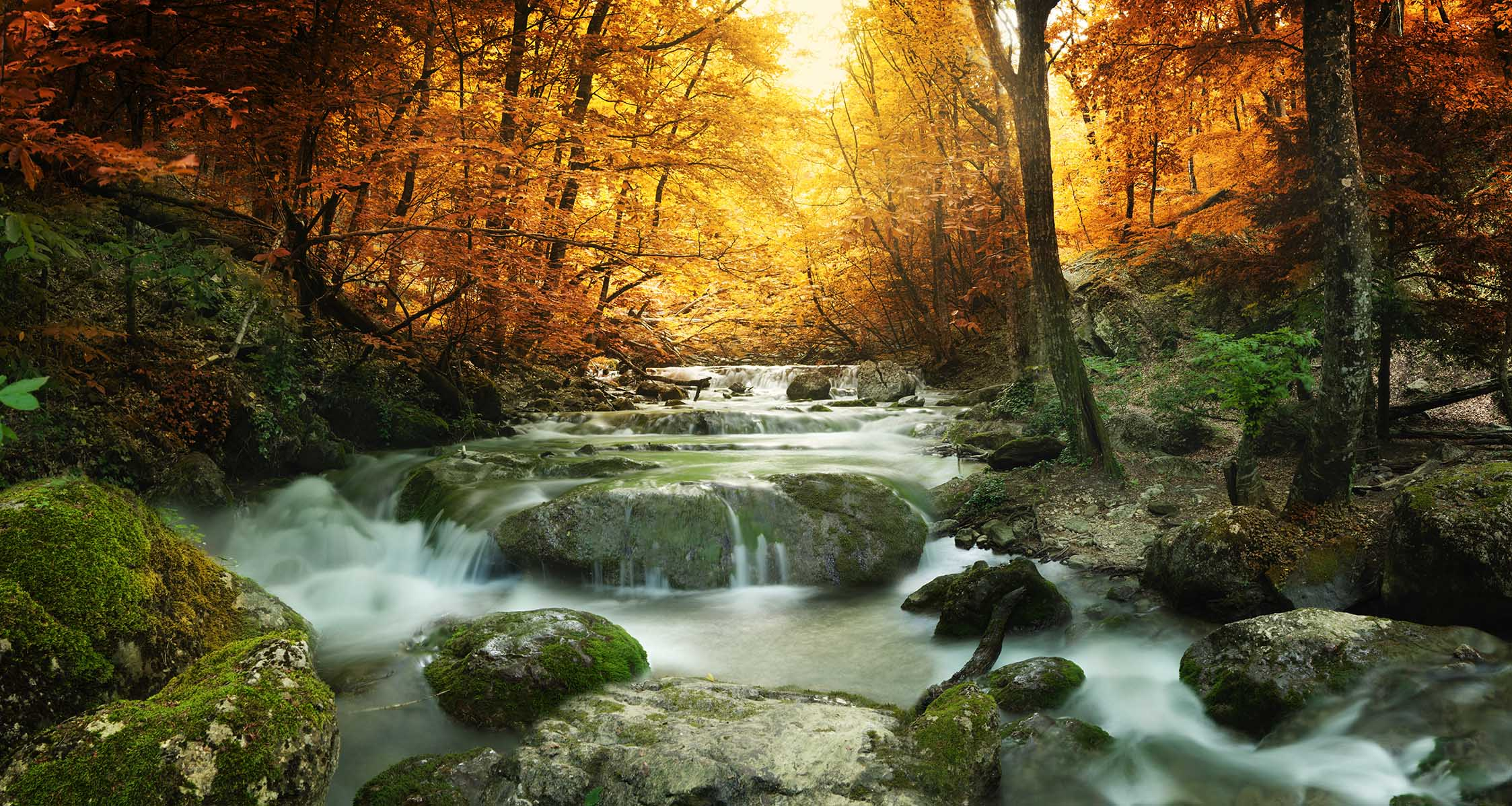 Canvas Prints - Forest Waterfall